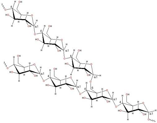 amylopectin_1.jpg